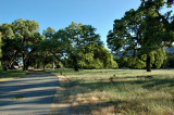 Riding under the Oak Trees