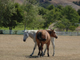 Playful Horses