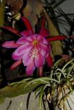 Blossoming Epi