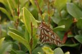 Butterfly in the yard