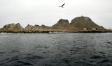 The Farallon Islands National Marine Sanctuary