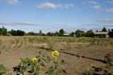 Disappearing Farmland