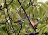 Hummingbird enjoying the showers