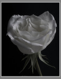 Favorite Flowers 2007