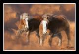 Equestrian Dream .jpg