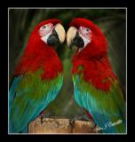 Double Talkers .jpg
