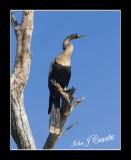 birds_san_blas__mexico