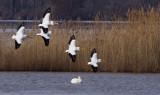 Pelicans  Landing 143.jpg