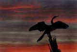 Silhouette at Sunset  .jpg