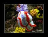Shed Aquarium .jpg