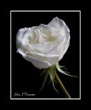 White Heart .jpg