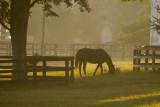 Horse Sil  068.jpg