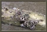 driftwood close-up