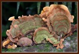 fungal bouquet