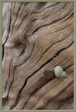shell and wood