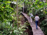 Sangkimah - Kutai National Park