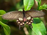 Tama Koen butterfly breeding garden