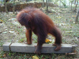 Kebun Raya Samarinda.JPG
