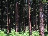 Near Lumajang