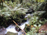 Gunung Gede banyak aliran sungai