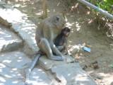 populasi monyet disini cukup tinggi