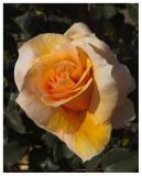 Flower #37d