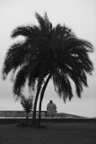 meditation of a palm tree on human condition
