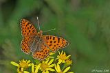 Papillons de Picardie