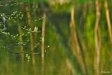 Quand une branche regarde les reflets dans l'Omignon