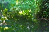 Les reflets sous le pont de branches