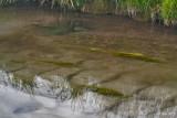 La source de l'Omignon