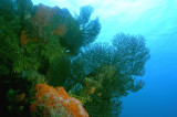 Fan Coral and sponges