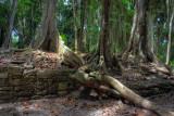 Yucatan Jungle