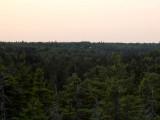 Cobscook Bay view from overlook