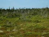 West Quoddy Bog