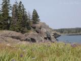 Campobello Island coast with Blue Flag Iris