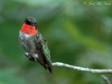 GA feeder birds: 2007-09