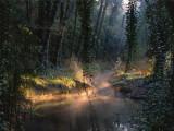 Spotlight at the river