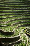 Vineyard - Quinta da Boavista