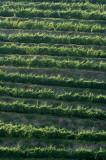 Vale Abraao - Vineyards