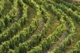 Vale Abraao - Vineyard