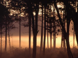 Morning Myst