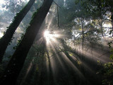 Rays of light #1