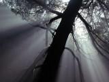 Rays of light #2