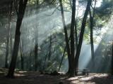 Rays of light #3