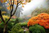 Garden in the Mist