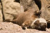 otter catchin some rays.jpg