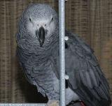 Carousel Parrot