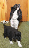 Owooooooooooooo!  She Aint Nothin But A Hound Dog!
