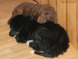 Sophie Bear Sleeping With Sibling